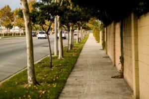 Деревья стена дорога